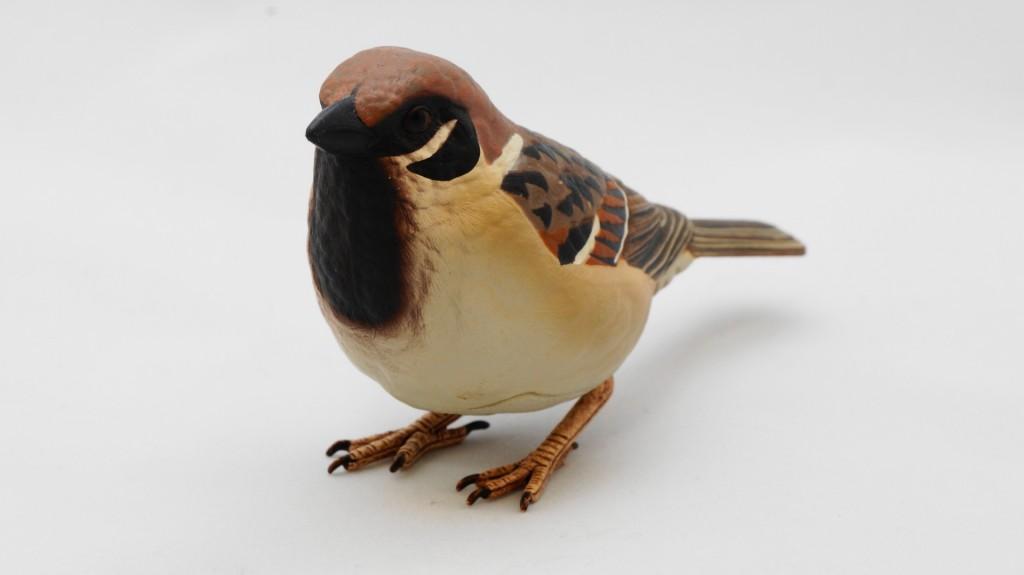 mybird0002