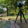 [都市鳥マニア]YouTubeアップまとめ DMC-FZ300で撮った4K動画をいくつか紹介